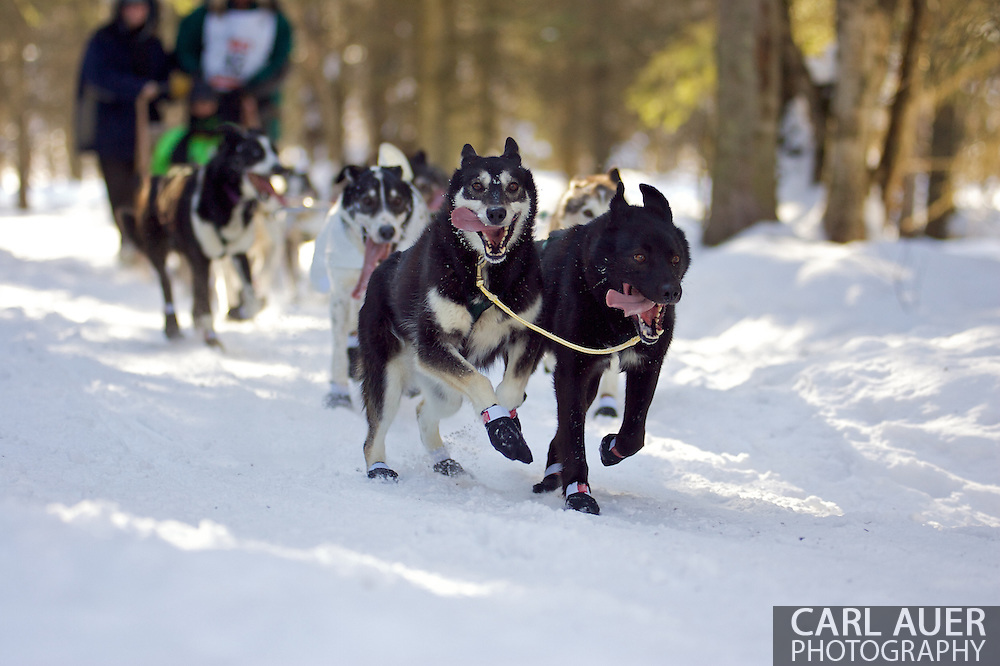 March 7th, 2009:  Anchorage, Alaska - The team of Sonny Lindners of Two Rivers, Alaska makes their way through the woods near the Alaska Native Hospital during the Ceremonial Start of the 2009 Iditarod.