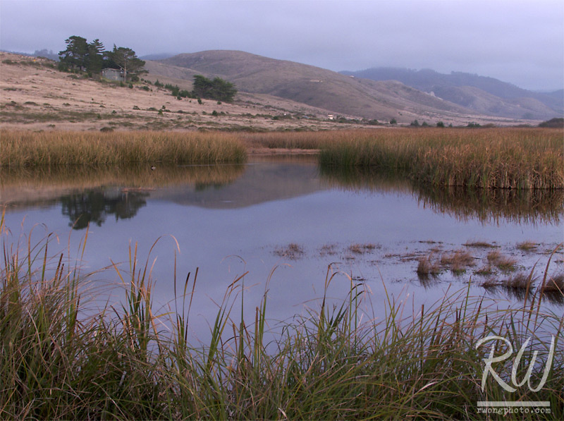 Wetlands, Point Reyes National Seashore, California