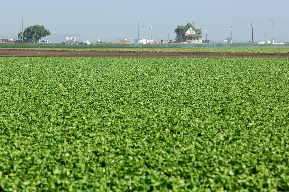 Vegetable fields, Harvest, Salinas, California, United States of America