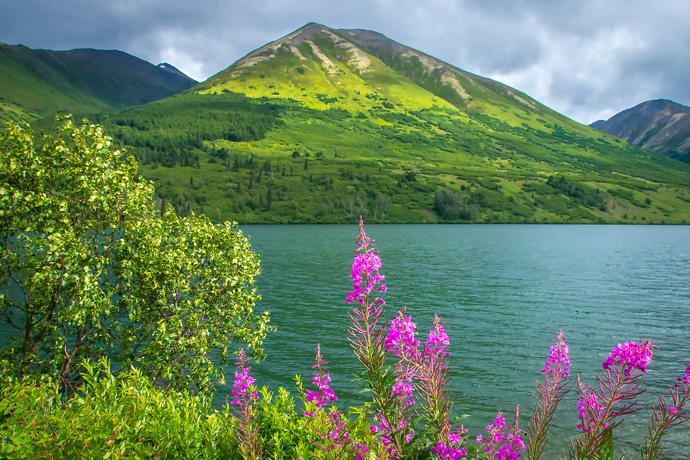 A scenic view with fireweed blossoms overlooking a teal colored secluded lake in Alaska.