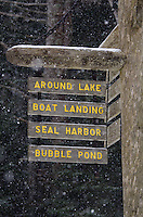 Snow falling on a signpost, Acadia National Park, Maine.