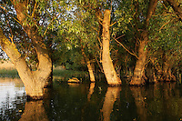 Danube Delta Scenery, Romania. May 2009 <br /> Mission: Danube Delta
