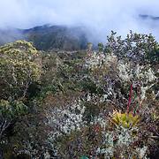 Tropical montane cloud forest