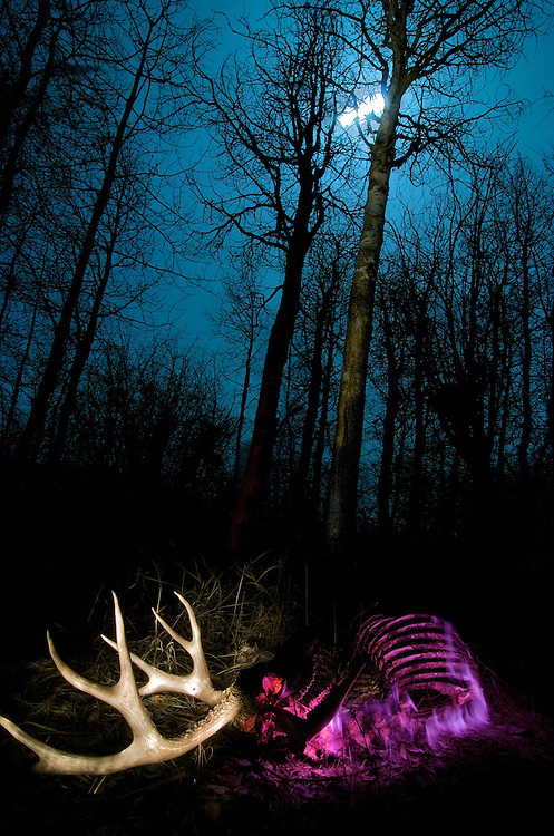 Light painting is the act of &quot;painting&quot; your subject with light sources (headlamps, flashlights, lasers) while your shutter is open.  It works best when you are in a very dark environment.  This image of a deer carcass and antlers was captured over a 21 minute period on a moonlit night in the Methow Valley of Washington State.<br /> <br /> This deer had been shot months before by a hunter.  If you look closely you can see a bullet hole in the antler.<br /> <br /> I used pink, red, purple and white flashlights to create this image.