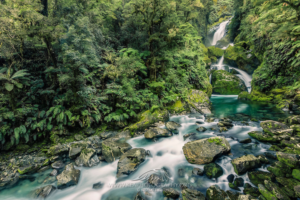 The lush Mackay Falls, nestled in the forests of Fiordland in New Zealand