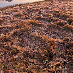 Salt marsh grass turns golden brown in fall in Rye, New Hampshire. Dawn.