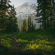 Mount Rainier's peak beyond the meadow - Paradise, WA