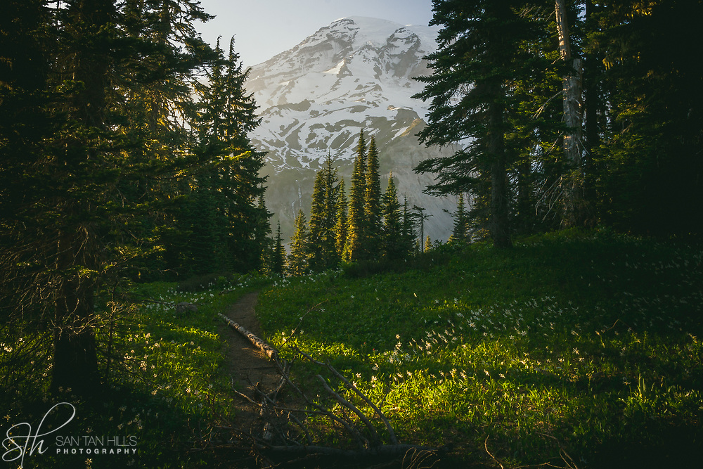 Mount Rainier's peak beyond the meadow - Paradise, WA