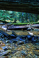 East Fork Bull River in an old-growth forest. Cabinet Mountains Wilderness Area, northwest Montana