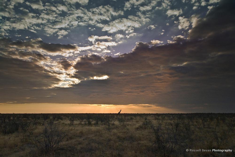 Giraffe Silhouette in Etosha National Park, Namibia