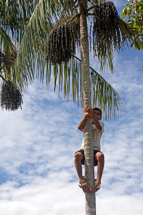 South America, Brazil, Amazon. Young boy climbs palm tree to pick acai berries for harvesting.