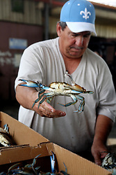 01 June 2010. New Orleans, Louisiana, USA.  <br /> Walter Gislair, a trawlerman all his life sorts crabs at Dean Blanchard Seafood Inc in Chalmette.<br /> Photo; Charlie Varley/varleypix.com
