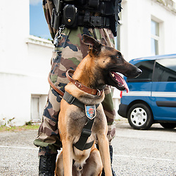 2012/10 Entraînement des équipes cynophiles Gendarmerie