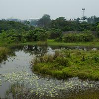 Urban wetland in city, Diyasaru Park, Colombo, Sri Lanka