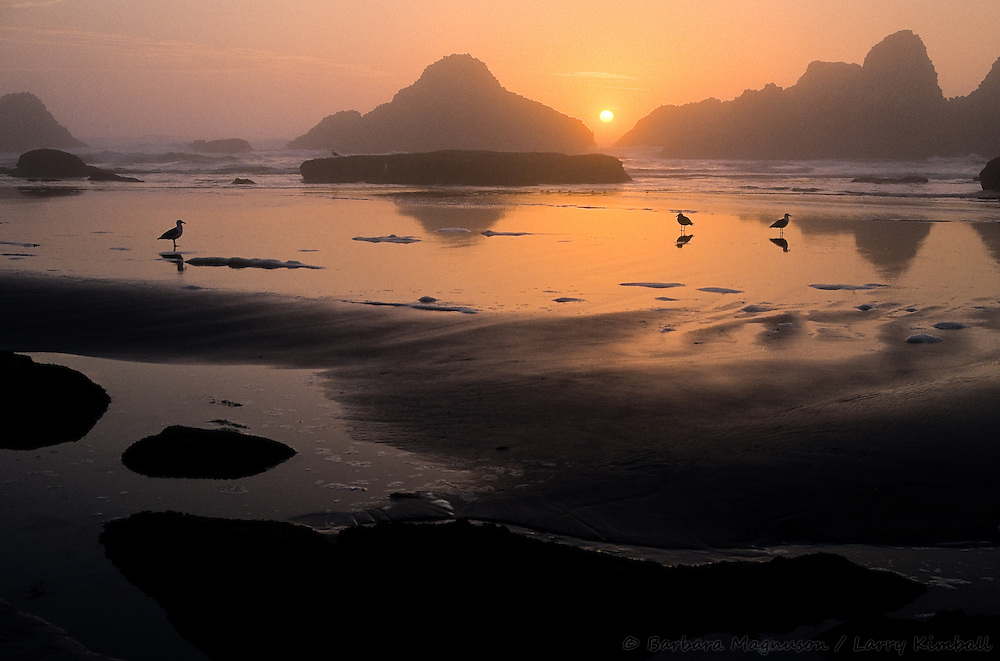 Sunset on Oregon Coast, Pacific Ocean at low tide; gulls and stacks silhouettes; Seal Rocks, N. Waldport, Oregon