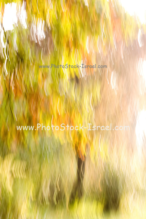 Motion blurred trees in a forest