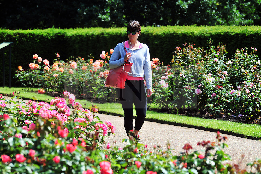 &copy; Licensed to London News Pictures. 09/06/2016<br /> A lady enjoing a walk in the Greenwich Park Rose Garden.<br /> Sunny weather in Greenwich Park,Greenwich,London  today (09/06/2016) <br /> <br /> <br /> <br /> (Byline:Grant Falvey/LNP)