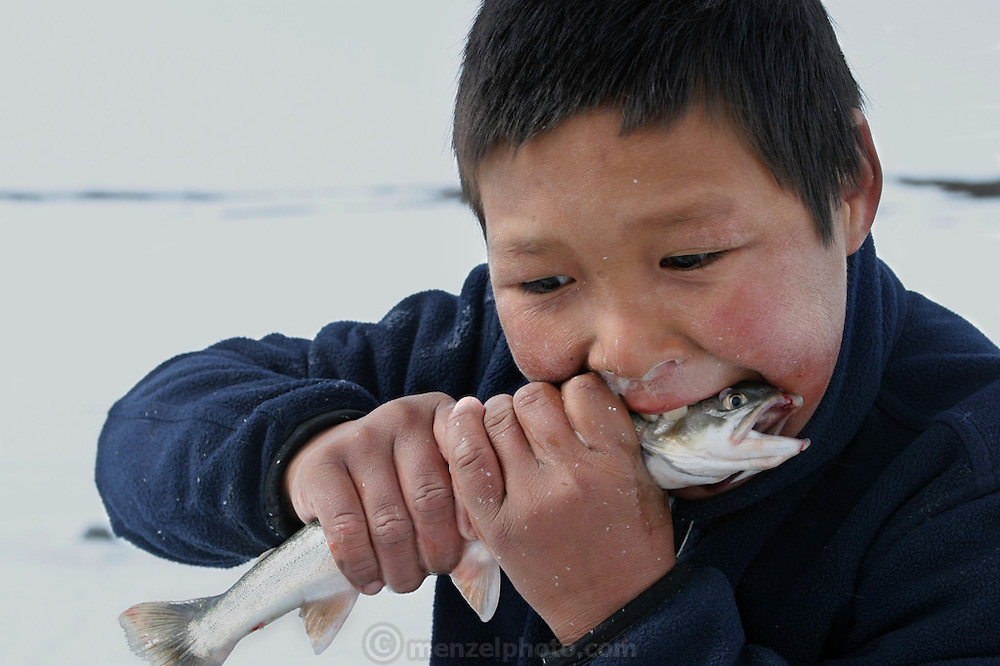 "(MODEL RELEASED IMAGE). Emil and Erika Madsen's nephew Julian bites down on an Arctic char, half in jest, for the camera because the fish is large, but locals say that children often eat small fish raw. It's said to ""tickle their bellies."" After chopping holes in the ice with a pike, family members lower down hooks baited with seal fat. When the char bite, they yank them out of the hole with a practiced motion. (From a photographic gallery of fish images, in Hungry Planet: What the World Eats, p. 204)."