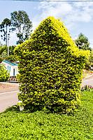 Canteiros públicos. Águas Frias, Santa Catarina, Brasil. / <br /> Street flower bed. Águas Frias, Santa Catarina, Brazil.