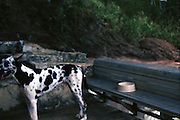 Raider the dog waits for her food bowl to be filled. 1986