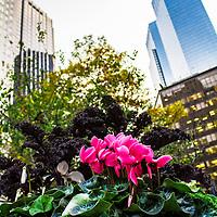 Lincoln Square BID flowers