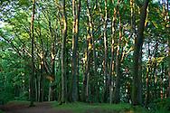 Europa, Deutschland, Nordrhein-Westfalen, Ruhrgebiet, im Wald am Ruhrhoehenweg im Ardeygebirge bei Wetter.<br /> <br /> Europe, Germany, North Rhine-Westphalia, Ruhr Area, in a forest at the Ruhrhoehenweg in the Ardey mountains near Wetter.
