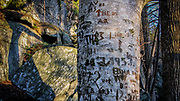Carved initials on a wooden tree trunk. Fall light.
