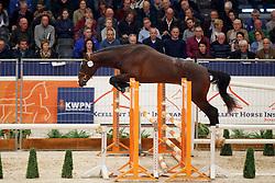 124, King Salvador<br /> KWPN Stallionshow - 's Hertogenbosch 2018<br /> © Hippo Foto - Dirk Caremans<br /> 31/01/2018