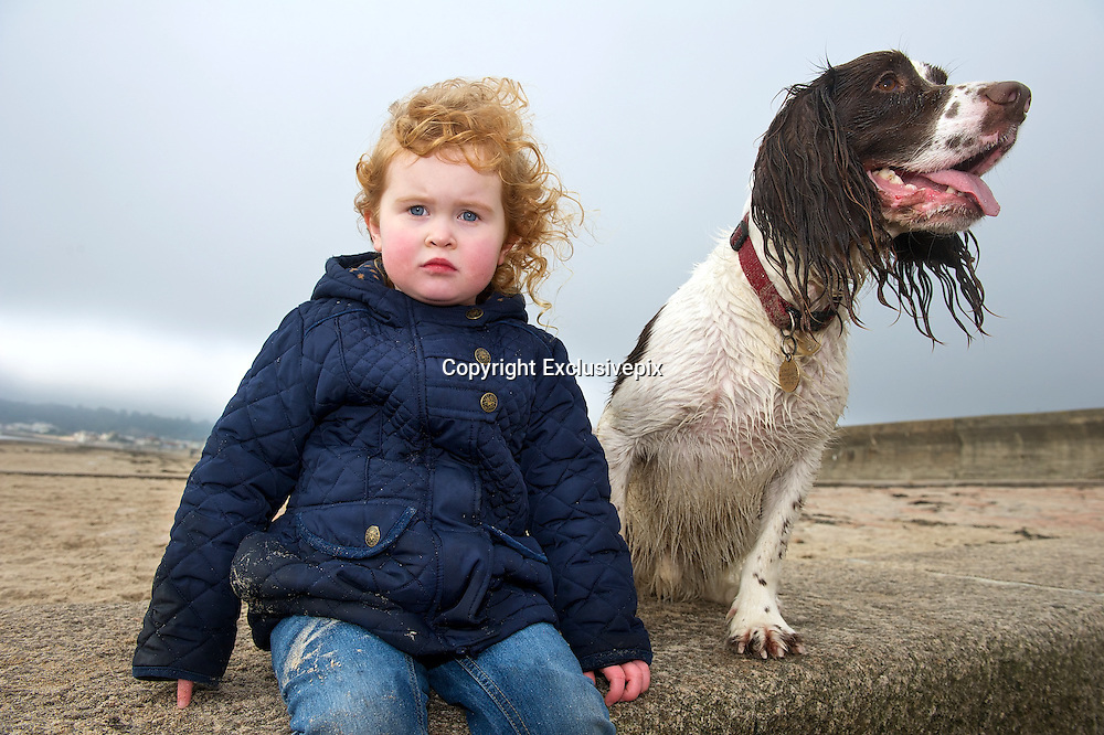 Blown away! Family's delight as Benny the spaniel leaps to fame after windy beach stroll is pictured around the world<br /> <br /> Meet possibly the most talked about dog on the planet right now: Benny the spaniel, whose bracing walk on the beach made us all smile.<br /> He became top dog on the world wide web yesterday after a hilarious picture of him with his ears flapping in the howling wind &ndash; and seemingly walking on his hind legs &ndash; appeared on the front page of the Daily Mail.<br /> As the image went viral and was widely shared on Twitter, we tracked five-year-old Benny down to his home in Jersey, where his owners declared themselves &lsquo;blown away&rsquo; by their beloved pet&rsquo;s new-found fame.<br /> <br /> Last night Richard Dale, 40, said: &lsquo;I can&rsquo;t believe it. I thought it was an amusing shot, but no more than that. To see it get so much coverage is amazing, just insane really.<br /> &lsquo;I took the photo at the beach where we take Benny a lot. He loves the beach. I was throwing tennis balls and he is landing after jumping to catch one, that&rsquo;s why he looks like he does with his ears up on end and as if he&rsquo;s standing up.<br /> &lsquo;It&rsquo;s a very lucky shot of him landing after jumping to try to catch the ball &ndash; and he obviously missed the ball or it would be in his mouth.<br /> <br /> Ishowed it to friends and they thought it was funny. Then after a glass of wine one night I thought it&rsquo;d be fun to send it to the local paper using the name of my two-year-old daughter Sophie and they put it on their website. It took off from there. I had no idea it would be such a hit.&rsquo;<br /> Mr Dale, who runs a gardening business, lives with Sophie and his wife in St Lawrence on the island.<br /> They bought Benny for &pound;400&nbsp; when he was a 12-week-old puppy from a breeder in Monmouthshire, Wales. One of a litter of four English springer spaniels, he had already been named when the Dales got him.<br /> Mr Dale said: &lsquo;He loves the sea and always has done. He isn&rsquo;t bothered by the wind, rain and elements, just as long as you&rsquo;ve got a tennis