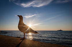 THEMENBILD - URLAUB IN KROATIEN, eine Möwe bei Sonnenuntergang im Gegenlicht, aufgenommen am 03.07.2014 in Porec, Kroatien // a seagull at sunset against the light in Porec, Croatia on 2014/07/03. EXPA Pictures © 2014, PhotoCredit: EXPA/ JFK