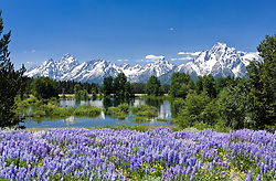Grand Teton National Park, Wyoming:  View of the Tetons from Christian Pond area.