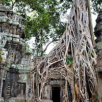 Jungle Temple of Ta Prohm in Angkor Archaeological Park, Cambodia <br />