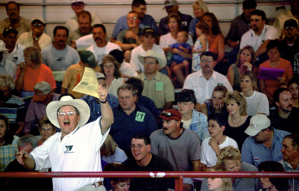 An auctioneer yells out a bid during a county fair livestock sale