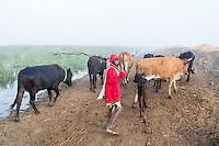 Herding cattle along a misty floodplain, Limpopo floodplain, Maputo Province, Mozambique