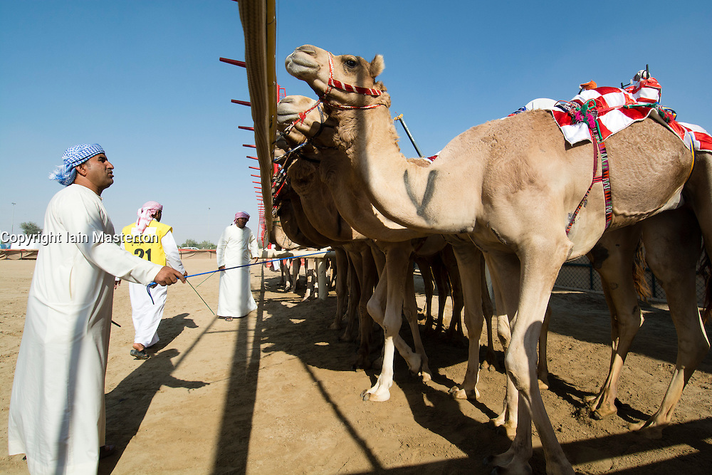 Starting gate at camel races at Duabi Camel Racing Club at Al Marmoum in Dubai United Arab Emirates