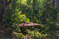 Sunlight streams into a rain forest.
