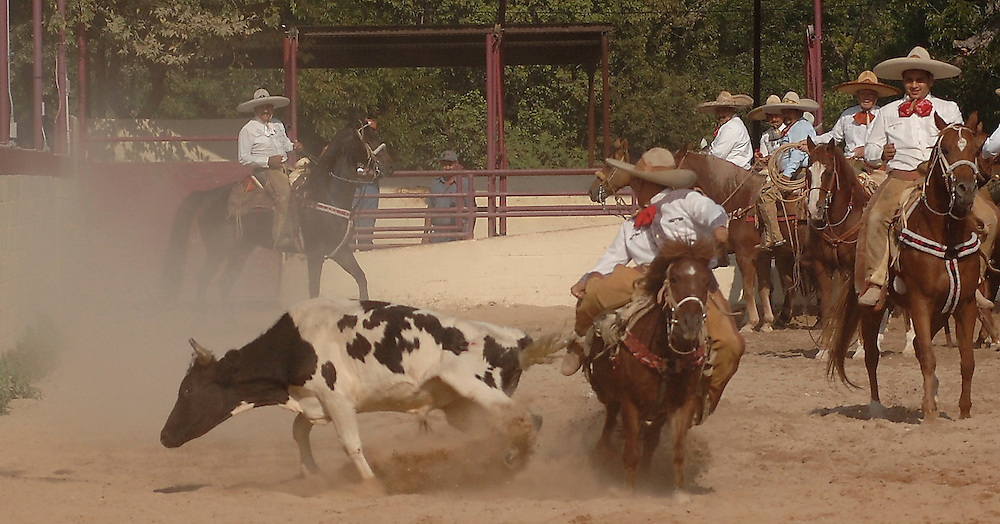 "SAN ANTONIO, Texas -- ""Tike"" Franco, Charros de Dallas, competes in the Colas (Bull Tailing) event at a San Antonio Charro Association hosted Charreada on Oct 23th, 2005 at the San Antonio Charro Ranch, 6126 Padre Dr. Tailing was used to stop bull without the use of ropes. Competitors are judged on proficiencies in the technique and are awarded points. (Photo by Lance Cheung)"