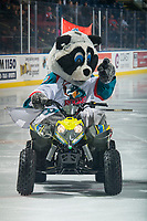 KELOWNA, CANADA - OCTOBER 10:  Kelowna Rockets' mascot Rocky Racoon exits the ice at the start of the game against the Seattle Thunderbirds on October 10, 2018 at Prospera Place in Kelowna, British Columbia, Canada.  (Photo by Marissa Baecker/Shoot the Breeze)  *** Local Caption ***