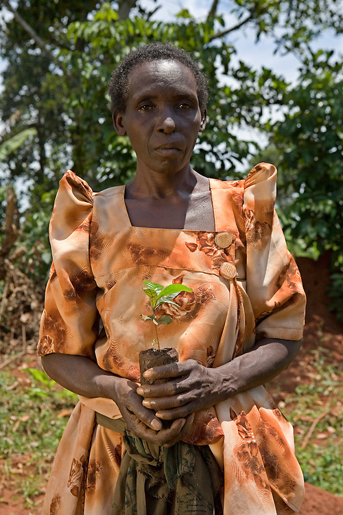 Monica Kigwa a coffee farmer holding a new seedling. Monica is suffering from Malaria, she is a widow with 4 children and 2 adopted kids. She produced 174 Kgs of coffee in 2006 after being re-trained by Kulika. Monica lives in the Kamuli district of Uganda. Coffee in the area is not organic but is Fair Trade. The Kulika project run Sustainable Organic Agricultural Training Programs.