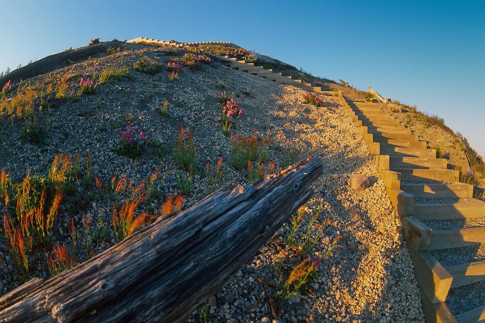 Sand Ladder at Windy Ridge (Fisheye), Mt. St. Helens National Volcanic Monument, Washington, US