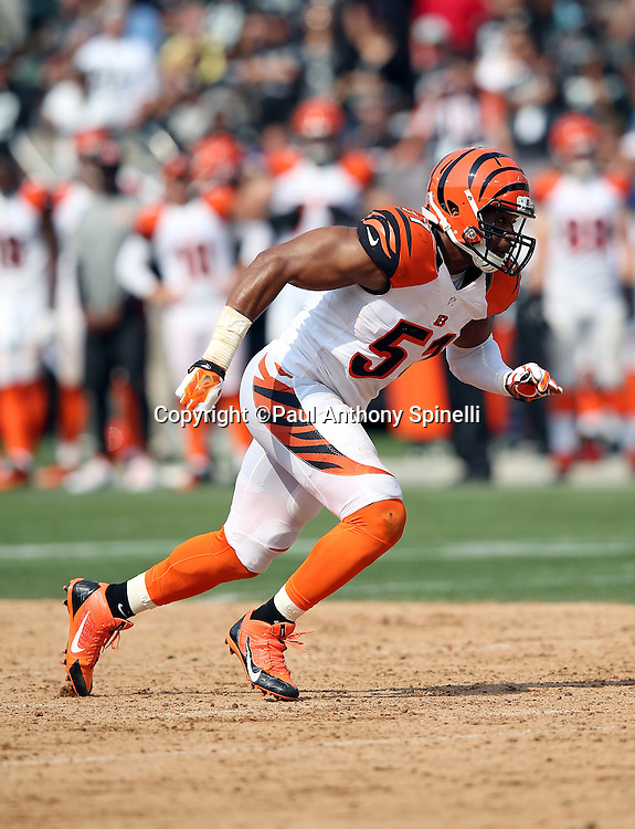 Cincinnati Bengals linebacker Chris Carter (51) chases the action during the 2015 NFL week 1 regular season football game against the Oakland Raiders on Sunday, Sept. 13, 2015 in Oakland, Calif. The Bengals won the game 33-13. (©Paul Anthony Spinelli)