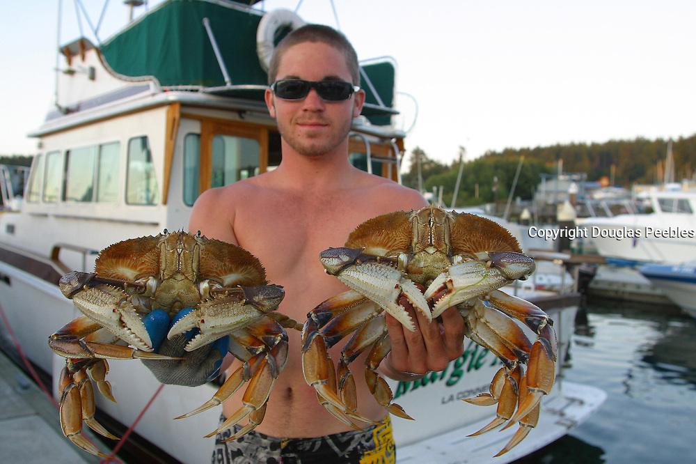 Dungeness Crabs, San Juan Islands, Washington<br />