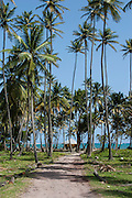 palm trees and hut on shore of Spring Bay in Bequia West Indies