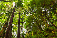 Vancouver Rain Forests