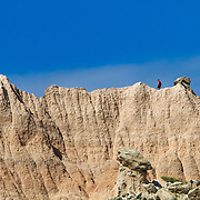 Badlands National Park in southwestern South Dakota protects 242,756 acres of sharply eroded buttes, pinnacles, and spires. The park protects an expanse of mixed-grass prairie where bison, bighorn sheep, ( Ovis canadensis ) and prairie dogs live today.  Photography by Jose More