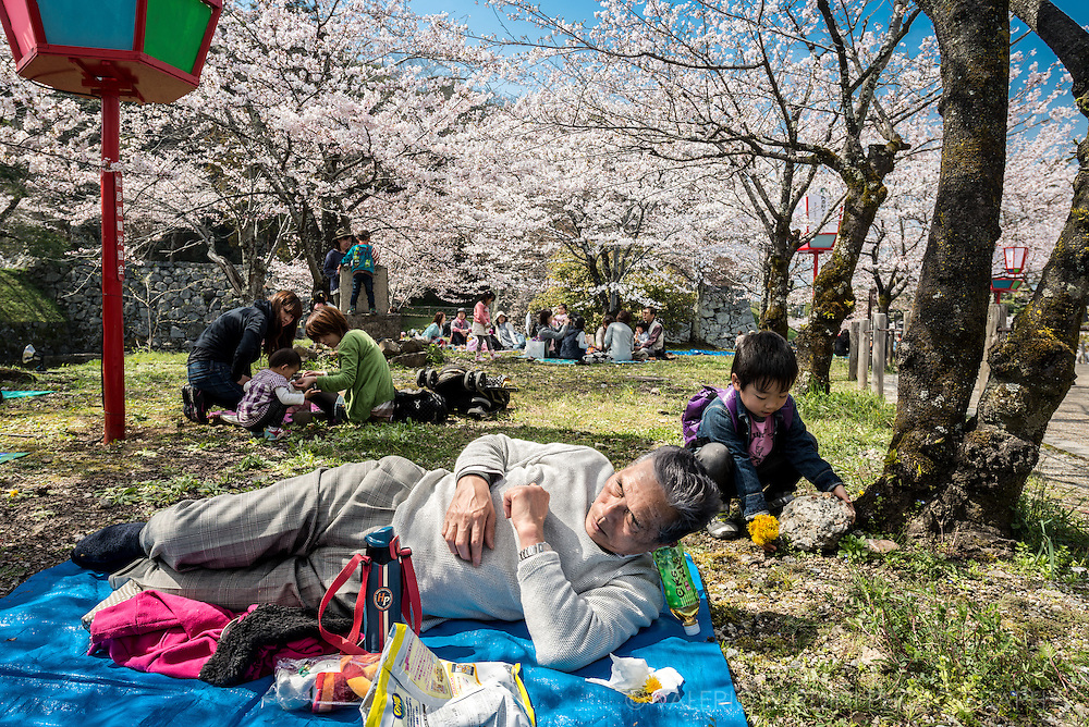 A man found a creative way to rest his head for a post hanami nap in Hikone castle park.