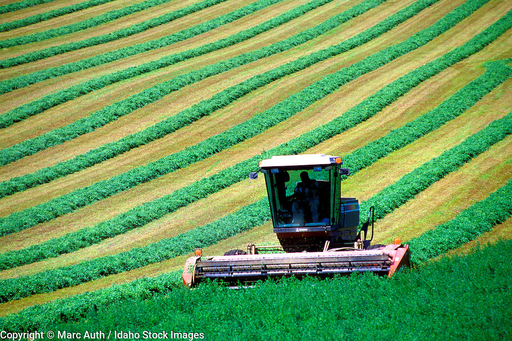 Farm equipment cutting alfalfa field. Idaho