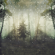 Surreal forest scenery - manipulated photograph<br />