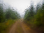 Rain droplets on a windshield blur the view on a dirt road in the forest, WA, USA