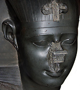 Head from a statue of a King (probably Nectanebo). 13th Dynasty Egyptian, dated approximately 370 BC. Made from Greywacke sandstone.